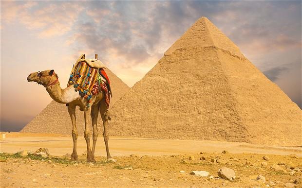 APCAMEL_Egypt