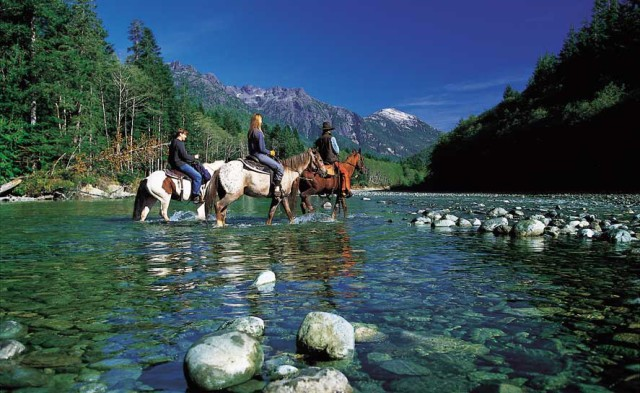horses-at-clayoquot-resort
